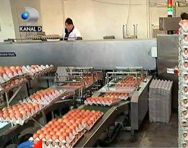 Razboi fara precedent intre autoritati din cauza scumpirilor! De ce s-au scumpit ouale...