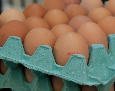 Raport oficial: Fipronilul, cauza principala pentru scumpirea oualor in intreaga Europa!