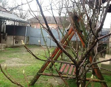 Au inmugurit copacii la Arad! Specialistii atrag atentia: temperaturile ridicate din...