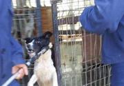 Scandal la adapostul de caini din Valcea! Voluntarii se tem ca animalelor li se pregateste eutanasierea. Iata petitia care circula - Asteptam reactia primariei