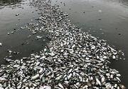 Imaginea dezolanta din Bucurestiul anului 2018 - Au secat Dambovita, dar s-au luat cu mainile de cap cand au vazut ce se afla pe fundul apei - Oare cand vom deveni si noi europeni?