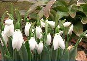 Meteorologii au facut anuntul! Cum va fi luna vremea in tara in luna martie!