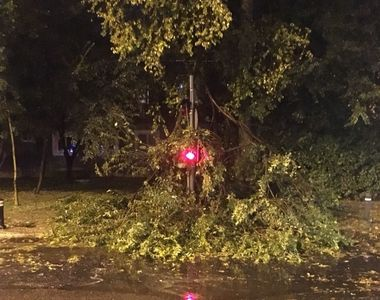 Traficul, blocat in Capitala, dupa ce un copac s-a prabusit pe reteaua de contact a...