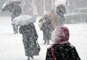 Iadul alb in Vrancea! Copaci doborati, masini avariate, mii de oameni fara curent electric din cauza vantului si a zapezii - E un dezastru