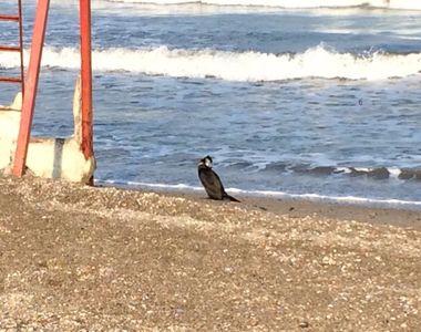 Pasarile de pe litoral au fost afectate de gerul din ultimele zile! Imagini dramatice...
