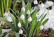 Schimbari bruste de temperatura. Vine Primavara sau ne asteapta un val rece de iarna in urmatoarea perioada?