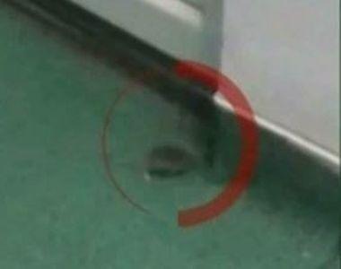 Scene ireale intr-un spital din Romania! Un barbat a filmat soareci langa patutul...
