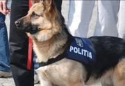 Parlamentarii vor pensie pentru caii si cainii de la Politie, Jandarmerie si Armata la iesirea din activitate!