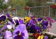 Cel mai scump buchet de flori! Un barbat s-a ales cu o amenda de 2500 lei dupa ce i-a adus iubitei panselute culese de pe bulevard!