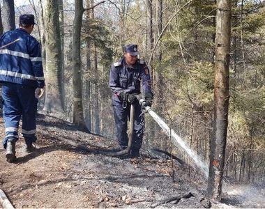 Incendiu intr-o padure din Bacau! Flacarile s-au extins pe o suprafata de 6 hectare!
