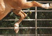 Un tanar din Iasi a ajuns in stare grava la spital dupa ce a fost lovit cu copitele de catre un cal! Lovitura l-a aruncat cativa metri!
