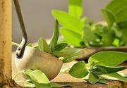 Tratamente naturiste pentru afectiuni ale rinichilor