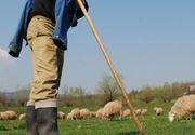 Crima la stana! Un cioban si-a omorat colegul dupa ce i-a dat cu bata in cap!
