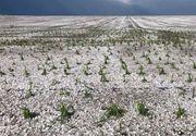 Grindina a lasat judetul Botosani ca dupa razboi! Furtuna violenta a devastat culturile fermierilor!
