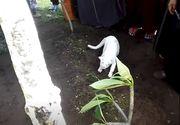 O pisica alba a aparut la inmormantarea tatalui sau si a inceput sa sape in mormant! Toata lumea si-a facut cruce si a inceput sa filmeze!