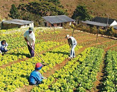 Lovitura pentru agricultorii care au facut credit la banca! Nu mai au cui sa vanda...