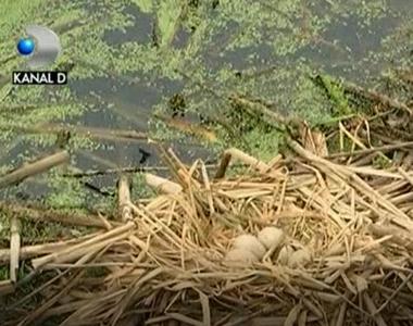 Pasarile care au supravietuit dezastrului ecologic din parcul Bordei sunt sanatoase, ne...