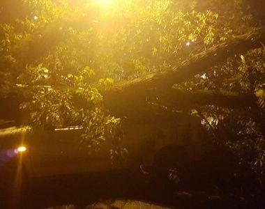 Craiovenii au dormit cu frica dupa ce mai multi copaci s-au prabusit si mai multe case...