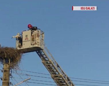 In sfarsit, o stire frumoasa! Cum s-au chinuit pompierii galateni sa salveze patru pui...