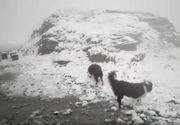 In Romania ninge, iar stratul de zapada a depasit 3 centimetri. Ce spun specialistii despre fenomen