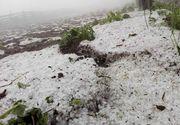 Recoltele din Cluj, distruse dupa ploaia cu grindina. Satenii sunt disperati
