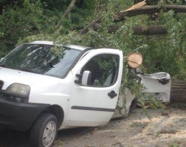 Un copac a cazut pe o masina si o locuinta in Brasov! Mai multe persoane au fost...