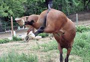 Ghinion teribil! A fost lovit de un cal, iar in drum spre spital a facut accident!