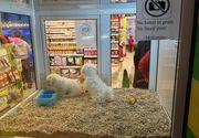 Este lege! Vanzarea animalelor de companie in pet shop-uri este interzisa. Amenzile sunt usturatoare
