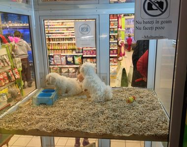 Este lege! Vanzarea animalelor de companie in pet shop-uri este interzisa. Amenzile...