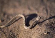 Pericol urias pe litoralul romanesc! Plajele s-au umplut de serpi! Turistii sunt speriati de acest lucru