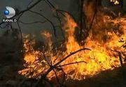 Padure arsa in Arges, de la o tigara nestinsa aruncata la intamplare