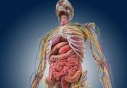 E oficial! A fost descoperit un organ nou in corpul uman