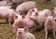 Romania nu a cerut niciun ajutor suplimentar de la UE pentru pesta porcina, desi poate solicita inclusiv decontarea a 50-75% din cheltuielile pentru despagubirea fermierilor