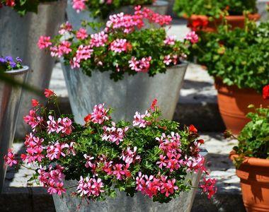 Cum sa iti decorezi balconul cu flori. 5 sfaturi de la floristii profesionisti!