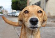 Oamenii cer pedepse mai mari pentru cei care tortureaza sau omoara animale. Proiectul de lege a fost inaintat catre Parlament