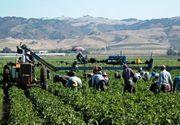 Un nou caz de sclavie in Italia! Mai multi muncitori romani erau obligati sa munceasca 11 ore pe zi pentru un salariu de nimic