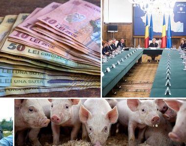 Despagubiri pentru pesta porcina: ce pasi trebuie sa urmati pentru a obtine banii...