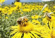 Patru copii de la o gradinita din Barlad au ajuns la spital intepati de albine