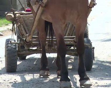 O tanara de 25 de ani a murit dupa ce masina in care se afla a lovit un cal lasat liber...