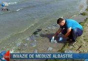 Invazie de meduze albastre pe litoralul romanesc! Ce spun biologii despre acest fenomen