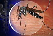 Se inmultesc decesele cauzate de virusul West Nile! Cele mai multe au fost inregistrate in Bucuresti