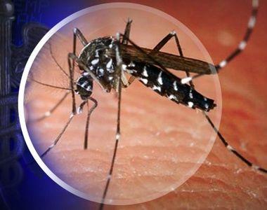 Se inmultesc decesele cauzate de virusul West Nile! Cele mai multe au fost inregistrate...