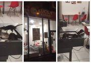 Sobalani in shaormerie! Imagini incredibile filmate de catre un trecator intr-un fast-food inchis!