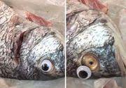 """Au pus ochi de plastic peştilor stricaţi pentru a-i """"împrospăta"""" - Clienţii magazinului s-au arătat dezgustaţi de acest lucru!"""