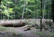Zeci de bombe şi proiectile descoperite într-o comună din Vrancea