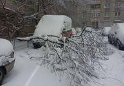 Prima zăpadă în Capitală, primele probleme. Copaci căzuţi pe maşini şi întârzieri pe aeroport