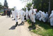România este ameninţată de mai multe epidemii! Mai scapă vreun animal din ţară neatins de boală? Iată ce spun specialiştii!