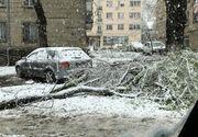 Bucureştiul, oraşul cel mai afectat în urma ninsorilor de ieri. 94 de copaci au fost rupţi, peste 60 de maşini avariate! A fost prăpad şi abia a nins