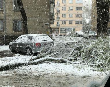 Bucureştiul, oraşul cel mai afectat în urma ninsorilor de ieri. 94 de copaci au fost...