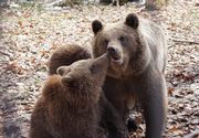 """Grigore şi-a donat ziua de naştere urşilor de la Zărneşti, pentru care a strâns 3000 de lei! """"Un băieţel de 12 ani a făcut un gest minunat pentru ursuleţii din Sanctuarul Libearty!"""""""